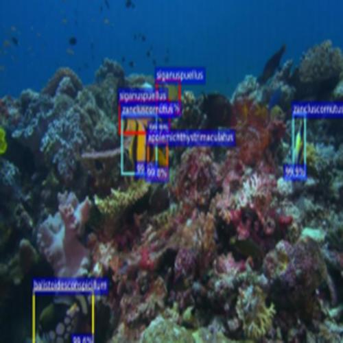 海洋鱼类及珊瑚礁识别